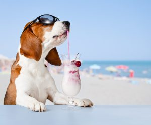 cool dog in sunglasses drinking frozen drink